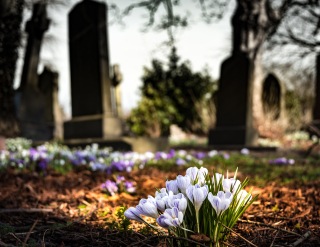Graveyard-church-crocus-cemetery-161280