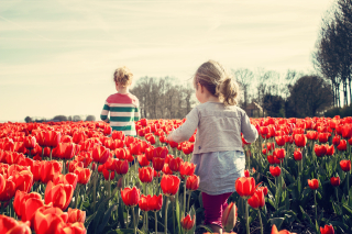 Bloom-blossom-children-36745