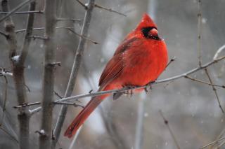 Animal-avian-beak-905248